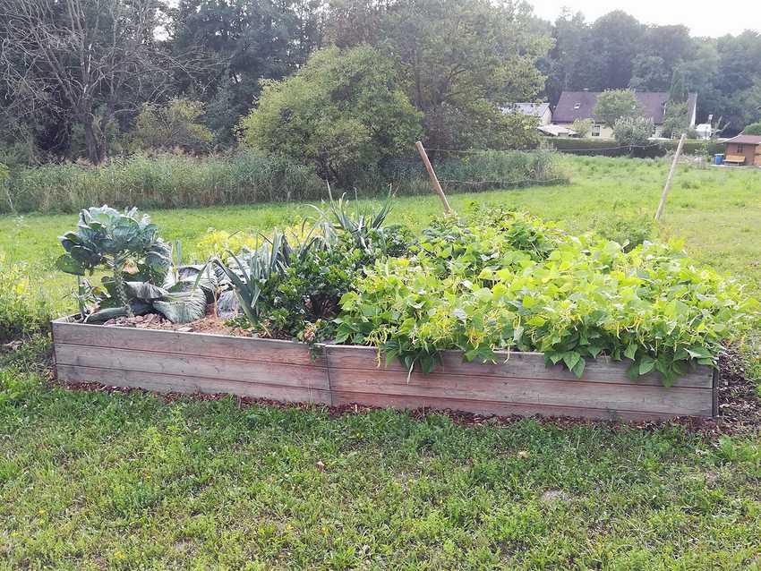 Hochbeet in Garten