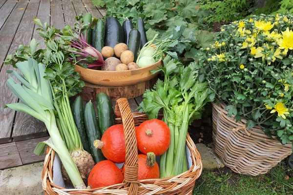 Ernte Hochbeet Gemüse